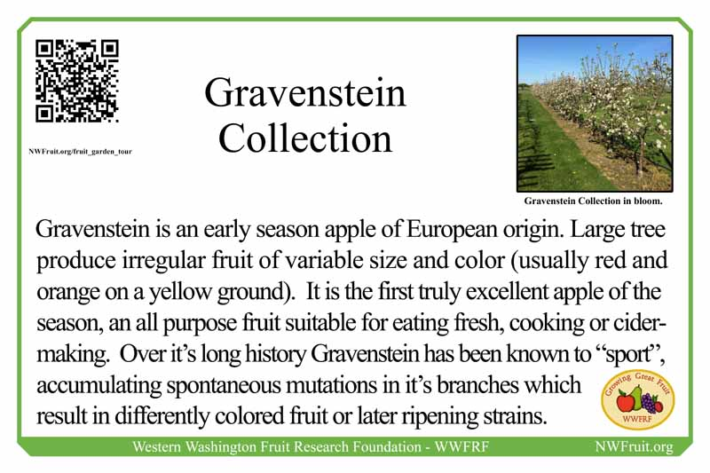 Gravenstein Collection small