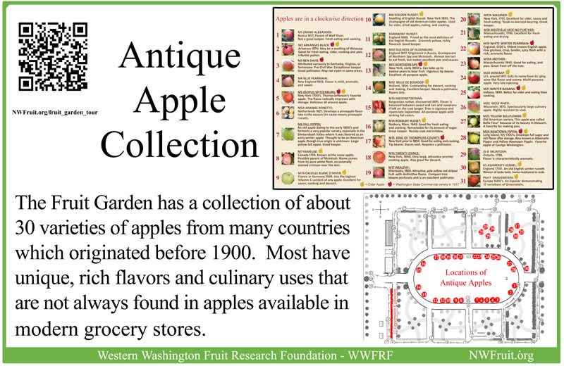 Antique Apple Collection sm