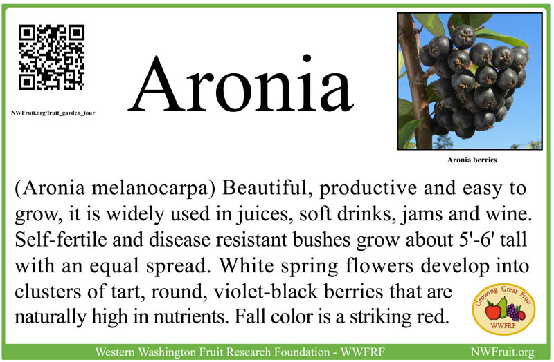 Aronia small res