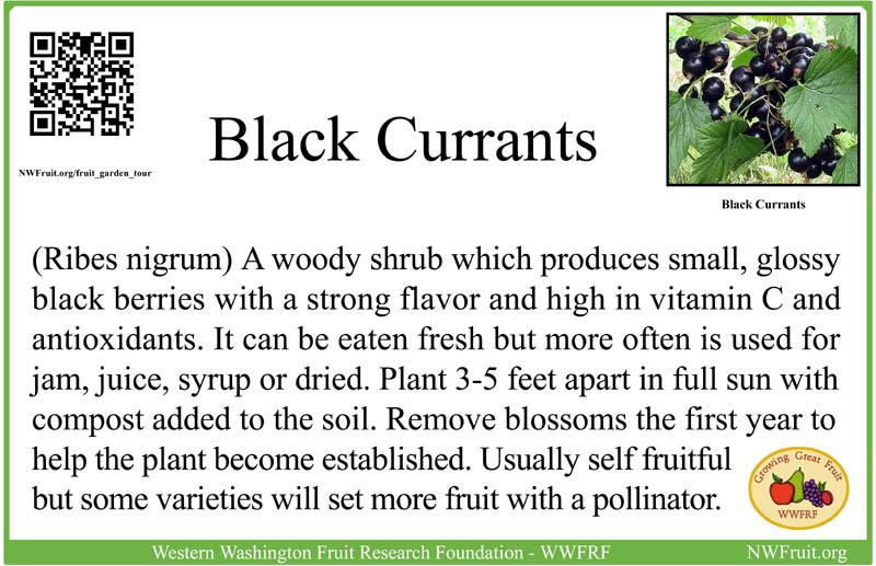 Black Currants sm res