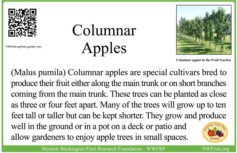 Columnar apples sm