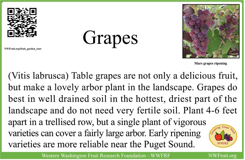 Table Grapes sm