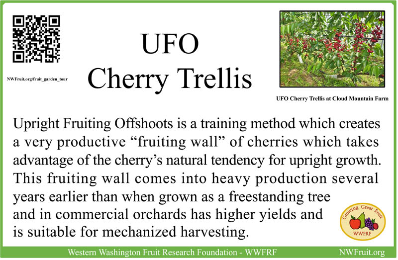 UFO Cherry sm res