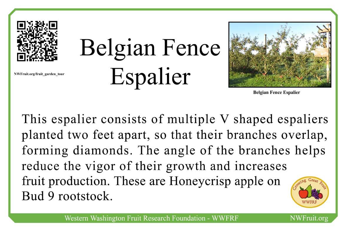Belgian Fence Espalier copy