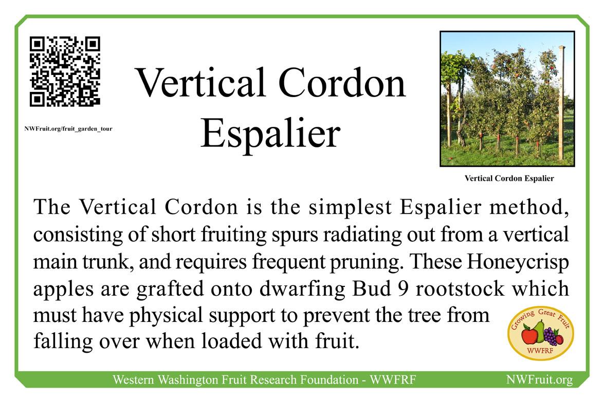 Vertical Cordon Espalier