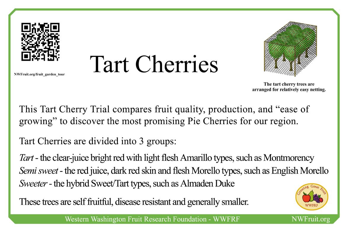 Tart Cherries 4